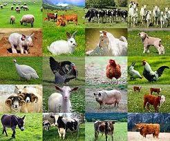 fotka: vegetariánství a ochrana zvířat